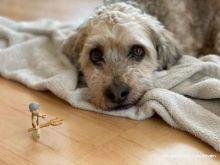 Bild_10_Hund